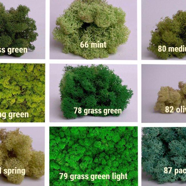 Стабилизированный мох Зеленый 1 кг